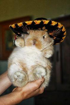 A bunny in a sombrero