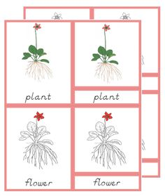 The Helpful Garden: Montessori Botany Primary Parts of Cards - Update!...