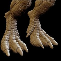 t rex feet - Google Search