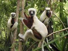 top 10 sites in Madagascar