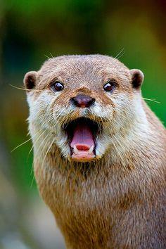 ~~ Otter ~~