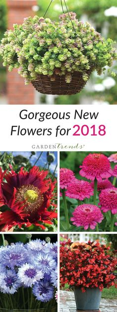 Exciting new ornamentals are now available for the 2018 season! From gorgeous new cut flowers to beautiful bedding plant varieties, you will not be disappointed with this incredible selection. Whether you want to try something new for your home garden or you want to impress your customers with your line-up of new products, find what you need here at Garden Trends! Click here to grow gorgeous new flowers in 2018! #gardentrends #flowers #flowergarden