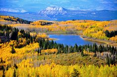 Fall Leaves on the Grand Mesa in Colorado. Went tubing in November of 1971 for the first time on the Grand Mesa, near Grand Junction Colorado. Enjoyed it so much!