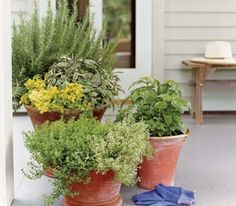 A Potted Herb Garden