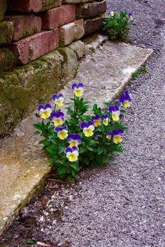 Простые Цветы, Экзотические Цветы, Дикие Цветы, Красивые Цветы, Синие Цветы, Цветоводство, Красивые Сады, Маленькие Сады, Осенний Сад