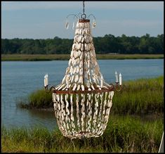 Oyster Shell Craze…. or Crazy!