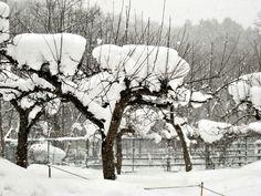 Winter . Hokkaido