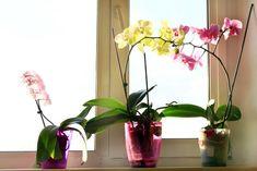 storczyk na parapecie Begonia, Glass Vase, Wreaths, Home Decor, Gardening, Outdoor, Gardens, Home, Beautiful Flowers