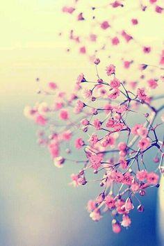 Fondo de pantalla-flores