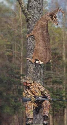 Create and share funny deer hunting graphics and comments with friends. Funny Animal Pictures, Funny Images, Funny Photos, Funny Animals, Cute Animals, Hilarious Pictures, Smart Animals, Funniest Pictures, Hunting Jokes