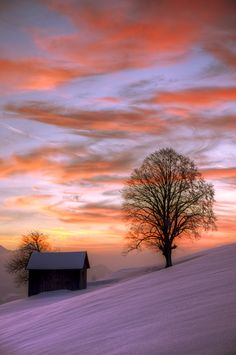 Winter Silhouette Beautiful view of a winter sunset over a isolated cabin and tree.