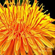 #faabest Nadine Johnston http://fineartamerica.com/featured/yellow-chrysanthemum-painting-nadine-johnston.html