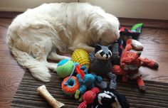 a pile of dog toys - Google Search