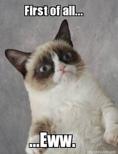 - Grumpy Cat - Ideas of Grumpy Cat - Ewwww! Grumpy Cat Ideas of Grumpy Cat Ewwww! The post Ewwww! appeared first on Cat Gig. The post Ewwww! appeared first on Cat Gig. Grumpy Cat Quotes, Funny Grumpy Cat Memes, Funny Animal Memes, Funny Animal Pictures, Funny Cats, Funny Animals, Cute Animals, Funny Memes, Grumpy Cat School
