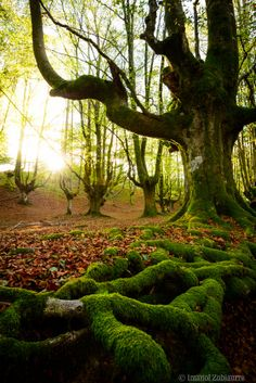 Roots by Imanol Zubiaurre on 500px