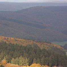 Autumn scenery 🍁🌲 by bohn.bonn on instagram  --- #eifel #hoheacht #autumn #autumncolors #fallcolors #naturephotography #naturelovers #beautifulnature #landscape #herbst #herbststimmung #herbstfarben #rheinlandpfalz #eifelexplorers #igersbonn #visitrlp