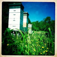 Williams Honey Farm: 10 Tips I wish some old guy had told me when I started beekeeping