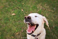The little dog laughed by Ananda Tiller, via 500px