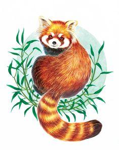 """Featured """"In Danger"""" Artist: Alisa Caves — Expedition Art Panda Sketch, Panda Drawing, Panda Illustration, Copic Drawings, Kawaii Drawings, Cute Animal Drawings, Cute Drawings, Red Panda Cute, Panda Painting"""