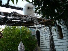 Een uil in de tuin!