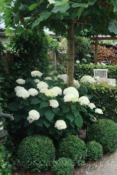 gartengestaltung ideen vorgarten reihenhaus vorgarten anlegen einfache ideen umsetzen. Black Bedroom Furniture Sets. Home Design Ideas
