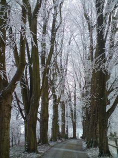 Winter wonder land. Haw frost. via Flickr.