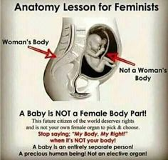 **anatomy lesson for EVERYONE who is pro-abortion. Life Is Precious, Choose Life, Conservative Politics, Pro Choice, The Life, In This World, It Hurts, Faith, Wisdom