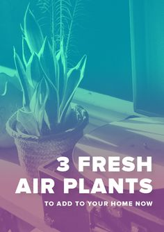 Try one of these indoor plants to get clean air in your home. They're easy and don't require a lot of sunlight.;