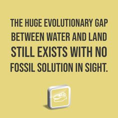 The huge evolutionary gap between water and land still exists with no fossil solution in sight. Institute For Creation Research, Vertebrates, Fossils, Be Still, Discovery, Gap, Sayings, Words, Water