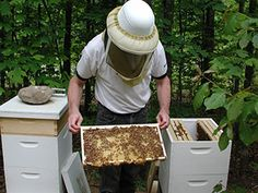 Beekeeping connects people with nature. #PollinatorWeek