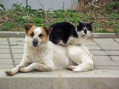 cat sitting on a dog