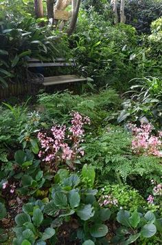 Garden and Home Tropical Design, Garden Plants, Pools, Exotic, Succulents, Home And Garden, Gardens, Gallery, Flowers