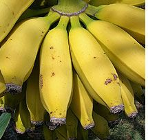How to grow bananas indoors