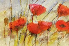 wild-poppies-lutz-baar.jpg