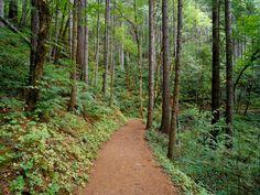 Recorre a menudo la senda que lleva al huerto de tu amigo, no sea que la maleza te impida ver el camino. (Proverbio indio)