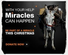 This Christmas' appeal from WSPA UK to help donkeys.