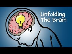 Unfolding The Brain Can the way the brain folds determine how you think? Engineer Ellen Kuhl explains how mechanical forces affect the wrinkles in your brain. By: PHD Comics.Get PHD Comics merchandise