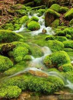 Moss covered rocks in a stream                                                                                                                                                                                 More