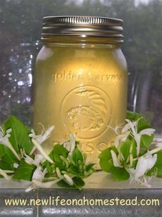 Honeysuckle Jelly Recipe - New Life On A Homestead easy 1 pint recipe