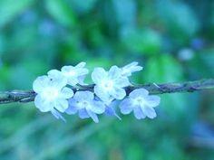 delicadeza da flor