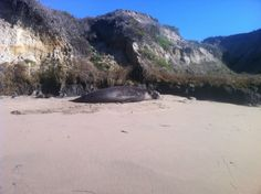 Elephant seals know how to relax!
