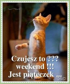 Weekend Humor, Funny, Pictures, Animals, Magick, Good Morning Funny, Photos, Animales, Animaux