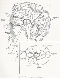 The pineal gland is your personal captains chair to your space ship. It is the gland that we use to navigate this wonderous vibrational reality. It is the gland we use to co-create reality with. We project our reality through this mighty gland and also use it to decode the vibrations sent to us through our five senses which creates our perspective reality