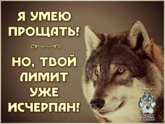 Wall Quotes, Just Love, Quotations, Friendship, Funny Memes, Wisdom, Motivation, Wolves, Quotes