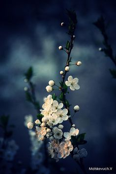 Ideas plants background wallpapers floral for 2019 Flower Wallpaper, Nature Wallpaper, Wallpaper Backgrounds, Image Nature, Nature Nature, Midnight Garden, Ikebana, Nature Pictures, Belle Photo