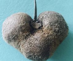 """Love Your """"Ugly"""" Kiwis And They'll Love You Back! Pic by @yisraelfamilyfarm 🥝💚"""