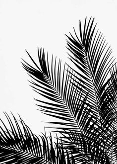 "Black Palm Tree One Poster - - Black palm poster ""A black and white poster depicting palm leaves. A detailed poster that goes nicely with our other black and white designs. Together with the """"Black Palm Tree Two"""" poster it makes a perfect pair! Black And White Aesthetic, Black And White Posters, Black And White Design, White Art, Wallpaper Schwarz, Desenio Posters, Gold Poster, Poster Photo, Groups Poster"