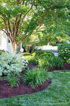 Front Yard Garden Tour from confessionsofaser. Front Yard Garden Tour from Front Yard Landscaping, Backyard Landscaping, Crepe Myrtle Landscaping, Backyard Ideas, Landscaping With Shrubs, Southern Landscaping, Landscaping Blocks, Landscaping Around Trees, Luxury Landscaping