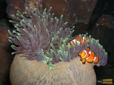 A great Photo taken during a night dive at Similan Islands, Thailand. By Ina Trumpfheller - www.my-divespot.com