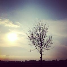 A #tree. #latewinter #landscape #nature